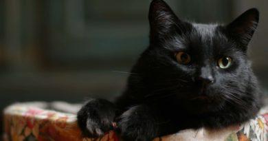 Черная кошка нашла приют в ателье