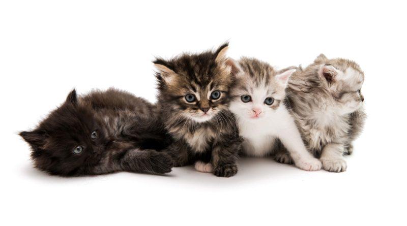 Котята на прилавке