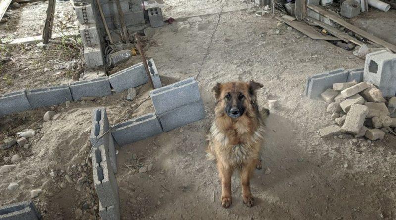 Бизнес-леди, очарованная собакой, купила её хозяину стройматериалы