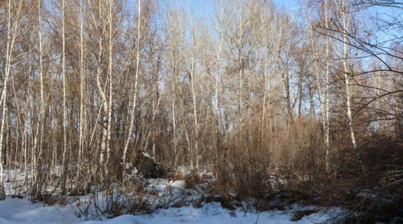 Акимат Талдыкоргана подаёт в суд на владельцев земли в лесополосе