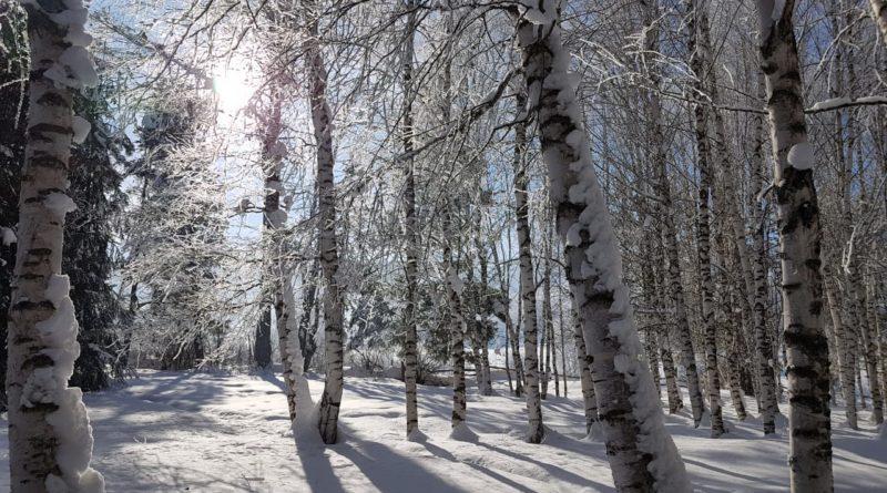 Прекрасная зимой природа