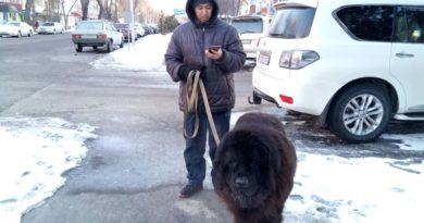 Заботливый мужчина и его собака